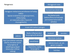 patgen-patfis-gk_konjungtivitis-bakterial