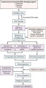 Cancer_utveckling